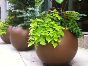 Large Round Planters
